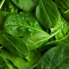 Greens - Spinach