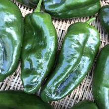 Peppers - Hot Poblano